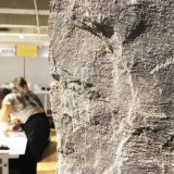 La pedrada, diálogos con la piedra