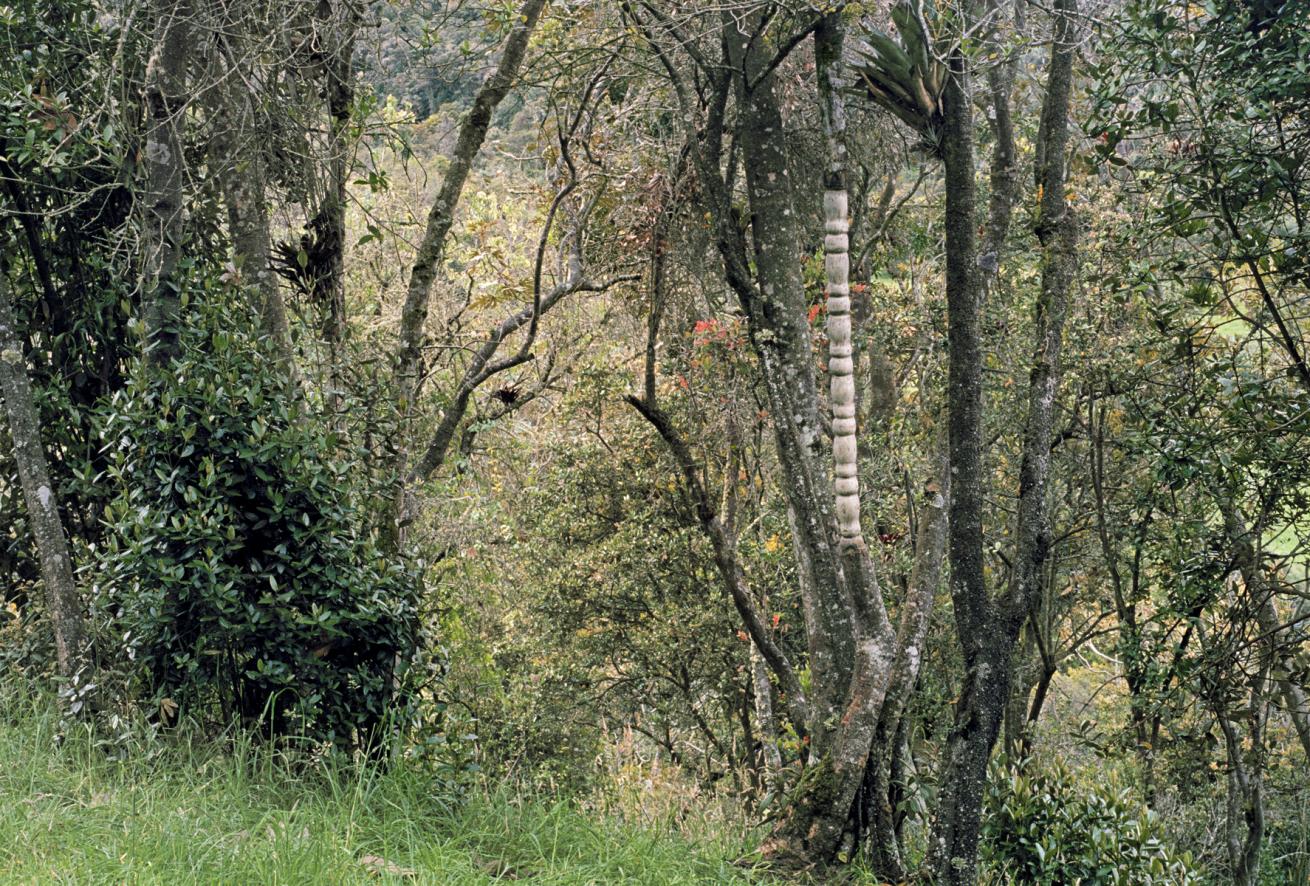 «Nuevas Floras» María Elvira Escallón, 2003.